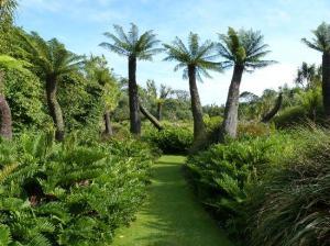 logan-botanic-garden PALMS