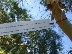 Poet Tree COLIN W 7 Aug 005