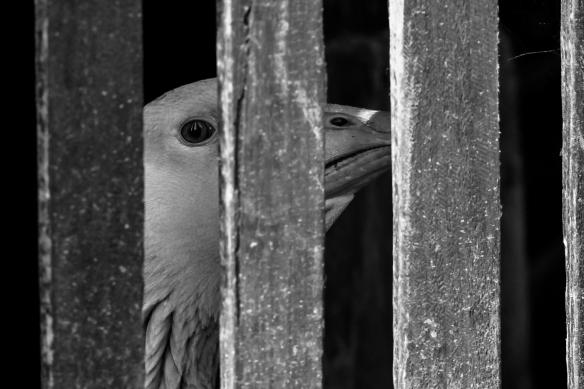 Goose Eye © Andrew Fusek Peters
