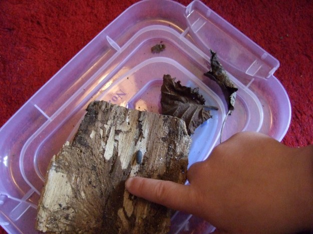 Woodlouse Poems finger box