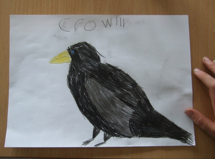 Crow House Ludlow Library crow drawing 6