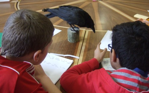 March 2016 crow2 Hargate at ARVON (73)